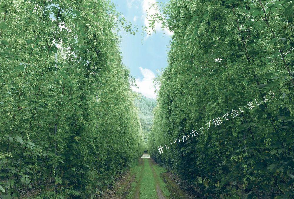 ズモナビール(ホップ畑イメージ)_01